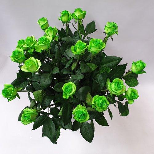 Rozen.nl Green roses