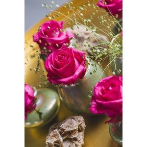 rozen.nl Rose Ivy+
