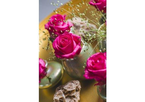rozen.nl Roos Ivy+