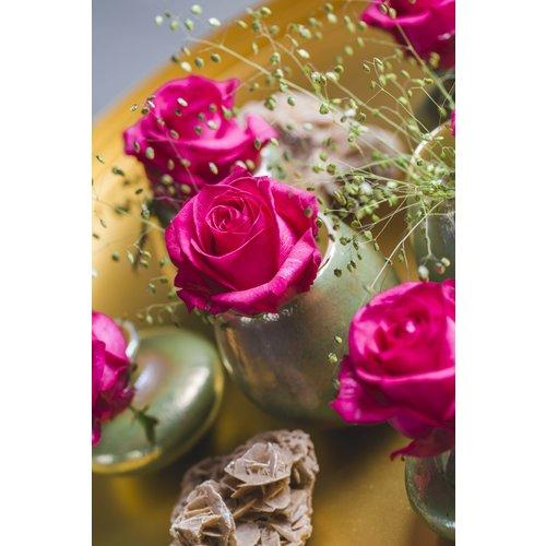 rozen.nl Roos Ivy+ cerise