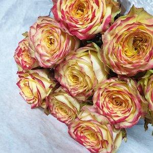 rozen.nl Rose Apple Jack