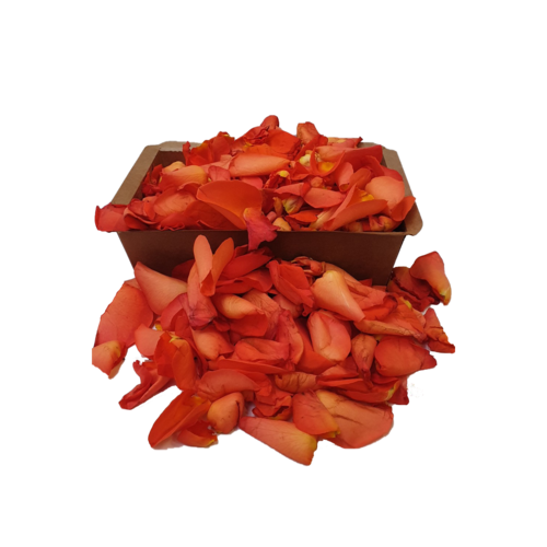 Rozen.nl Orange rose petals