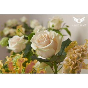 "Rozen.nl Rose offer of the week ""Talea"""