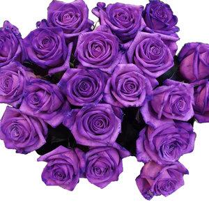 Rozen.nl Paarse rozen