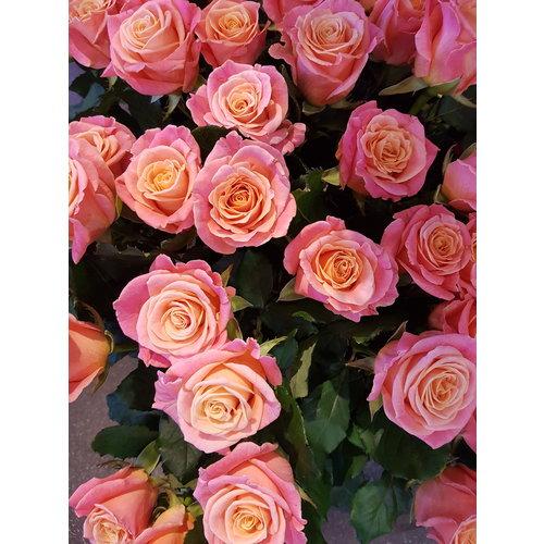 """Rozen.nl Rose offer of the week """"Talea"""""""