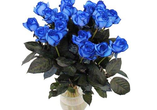 Geverfde rozen