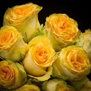 Rozen.nl Lemon Finess