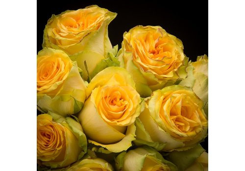 Rozen.nl Yellow Finess