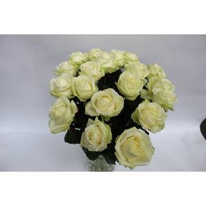 rozen.nl 20 Roses White - Pink or Cream