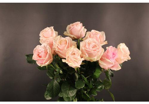 rozen.nl Parfum de Grande
