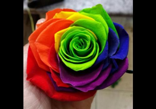 Rozen.nl Vendela - Regenboog rozen - 1 stuk
