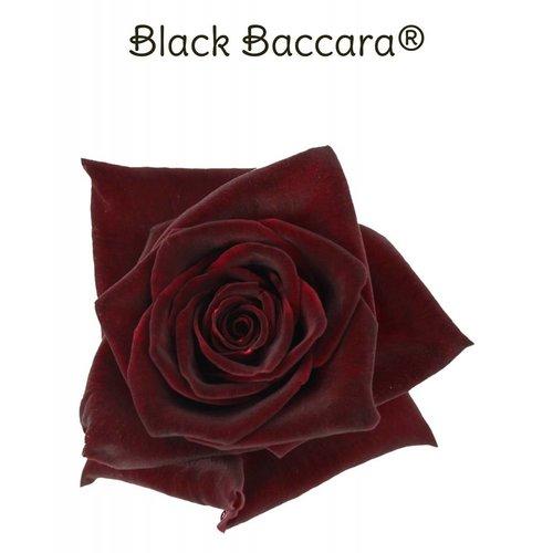 Rozen.nl Black Baccara