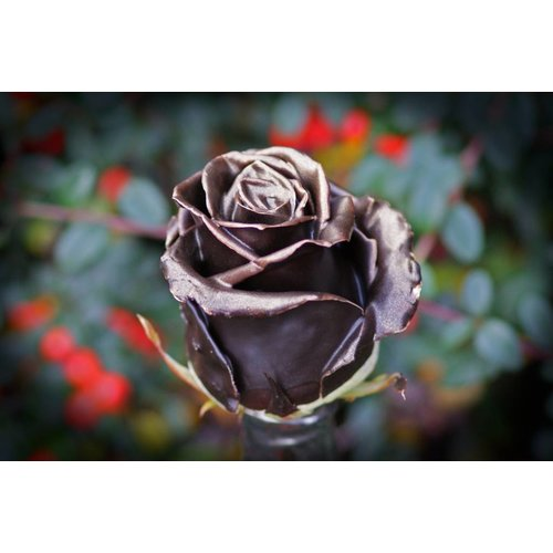 Rozen.nl Chocolate gold R-384