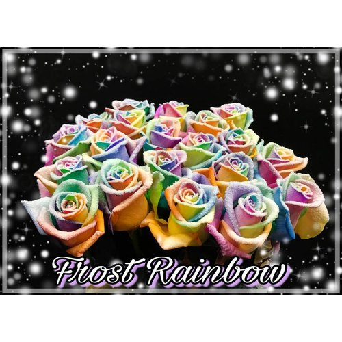 Rozen.nl Frost mix Rainbow
