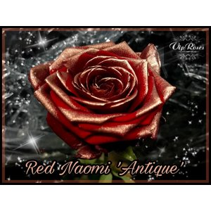 Rozen.nl red