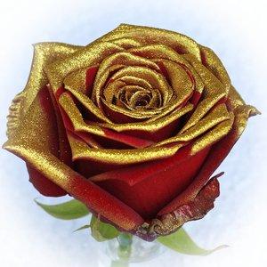 Rozen.nl Red Naomi+ glitter gold