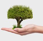 Élimination des mauvaises herbes en respectant l'environnement