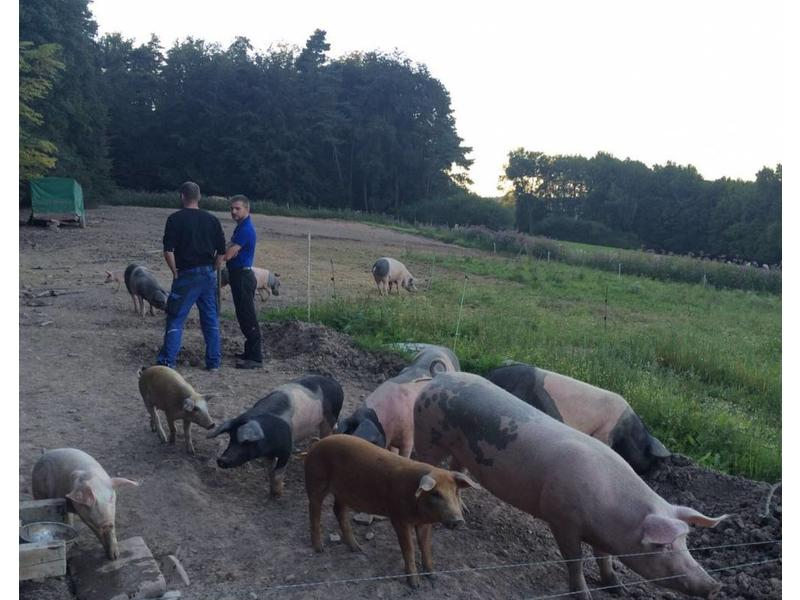 Schweinenacken Buntes Bentheimer 2,5 Kg