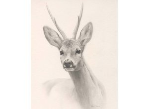 Drawing ofRoebuck (35 x 45 cm)