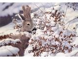 A winter tale (70 x 50 cm)