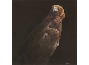 Golden Eagle 1 (50 x 50 cm)