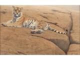 Special size edition - Save the Tiger (135 x 95 cm)