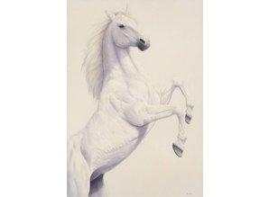 Prancing White (65 x 95 cm)