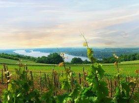Servie | Maurer Wines