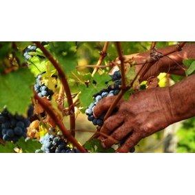 Temet Wines
