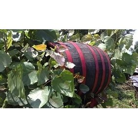 Botunjac Winery