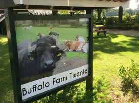 Denekamp | Buffalo Farm Twente