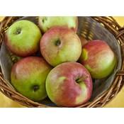 Appel Domestica ´Rode Jonathan´