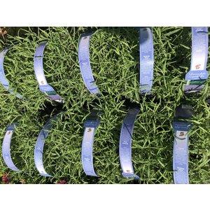 Lavendel Munstead Tray 6 stuks