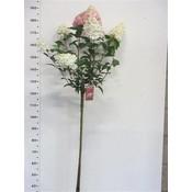 Hydrangea paniculata Vanille-Fraise op stam