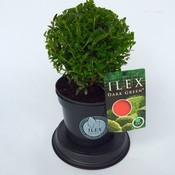 Ilex Dark Green Bol