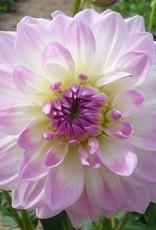 4 stuks Pretty in Pink UITVERKOCHT