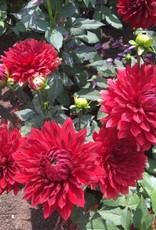 4 stuks Garden Wonder Levering vanaf december