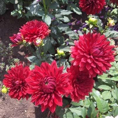 4 Stück Garden Wonder Lieferung ab Dezember