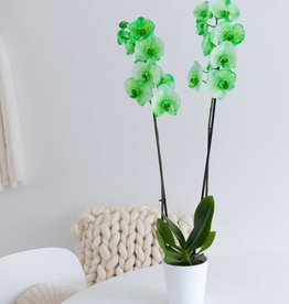 Orchidee Green Bubble