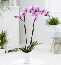 Green Bubble Orchidee Crush
