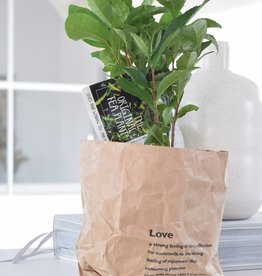Green Bubble 2x Theeplant in paperbag