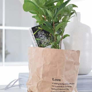 2x Teaplant in paperbag