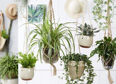 Al onze planten