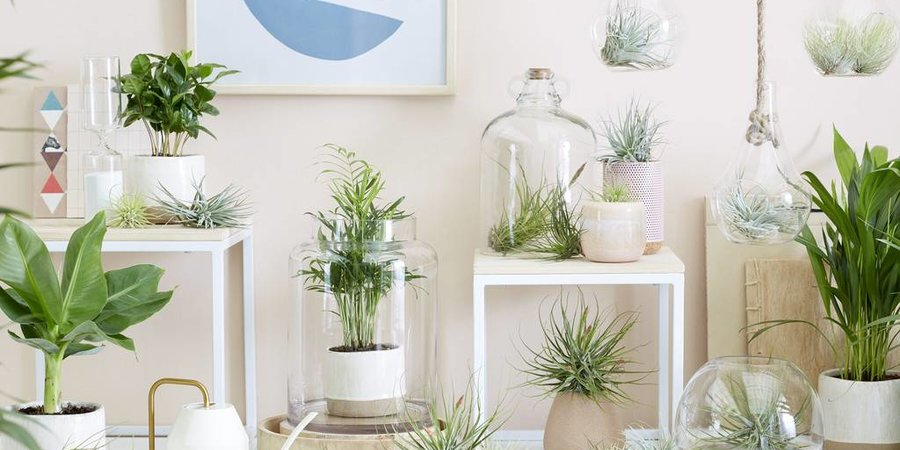 De trend van dit moment: Air plants