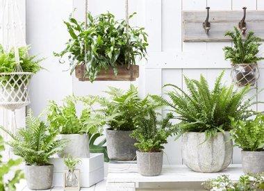 Planten tot € 25-