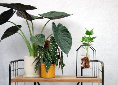 Planten met pot