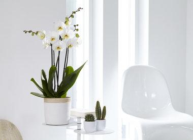 Geef je orchidee een tweede leven