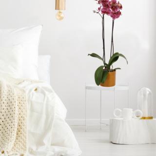 Confetti orchid