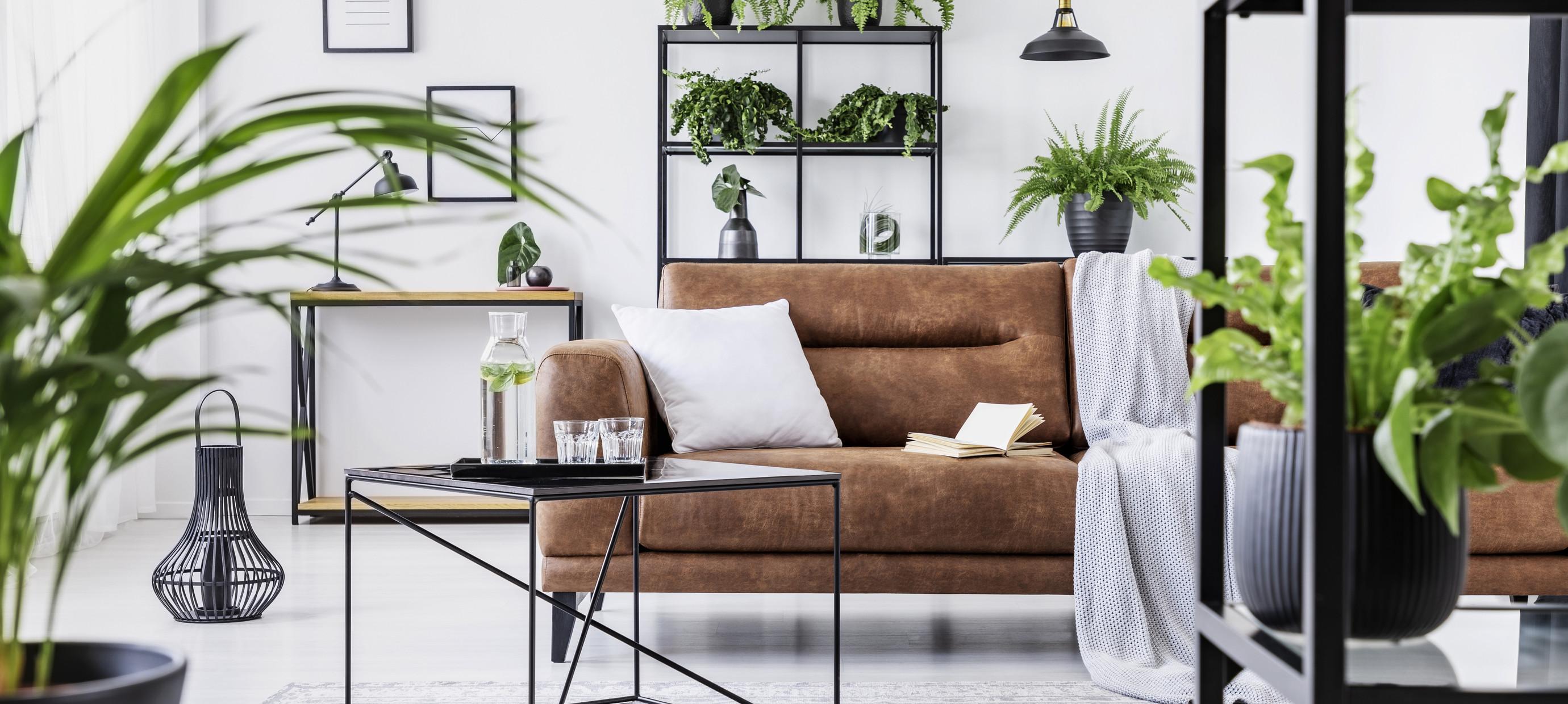 Maak je huis luchtzuiverend met deze groene planten