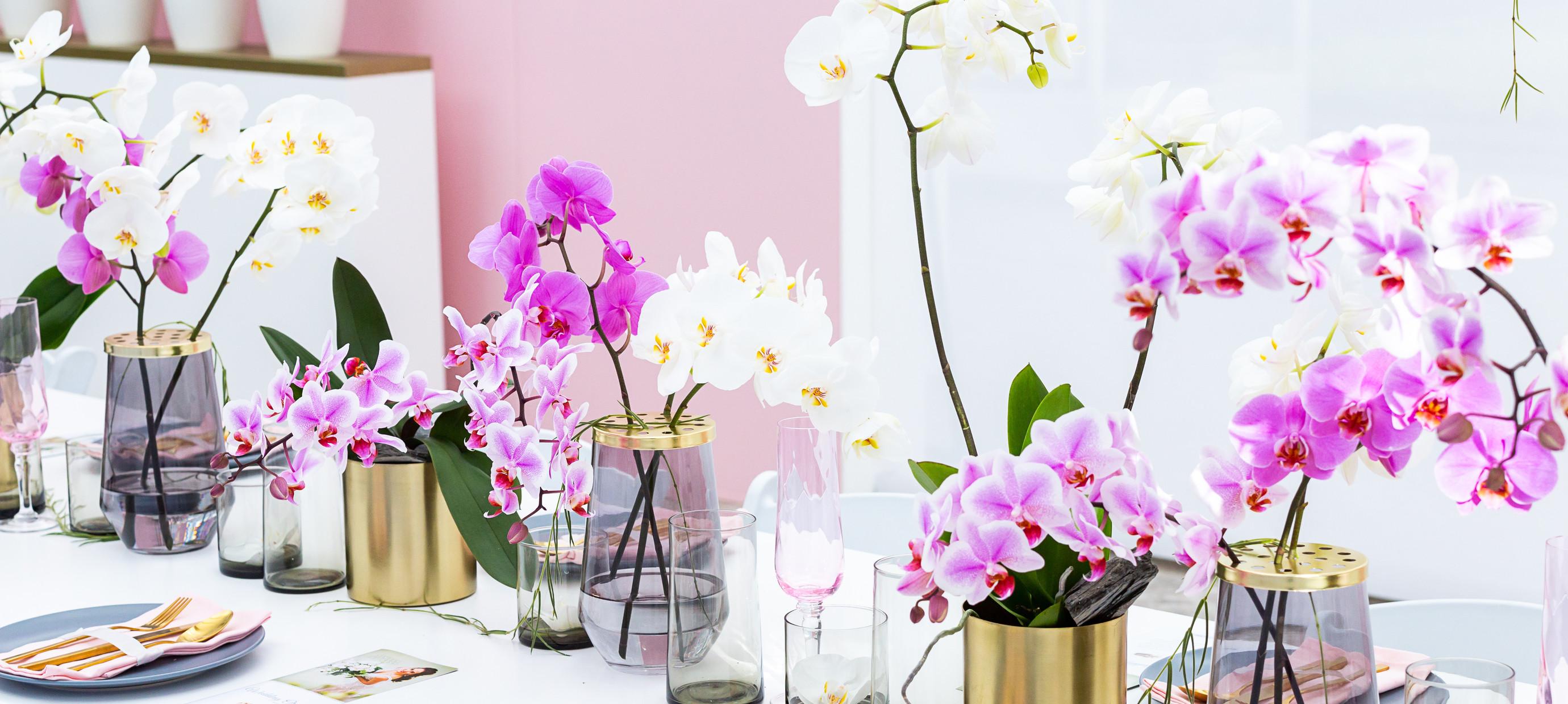Kwaliteitsorchideeën, hoe herken je ze?